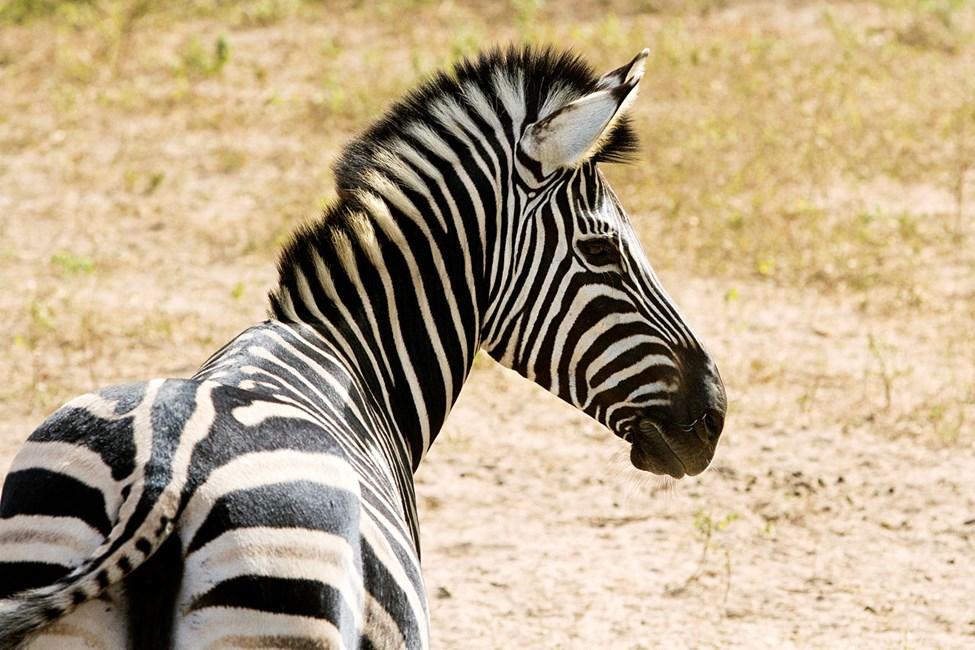De Fathala Wildlife Reserve, Senegal