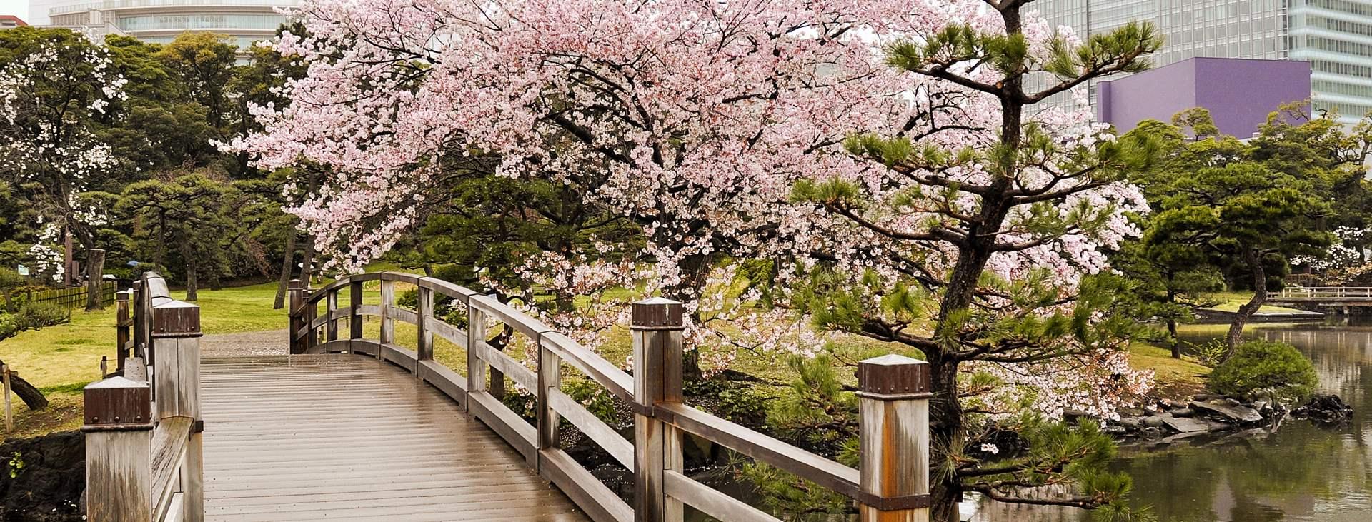 Lähde Japaniin ja varaa lennot + hotelli Tjäreborgilta