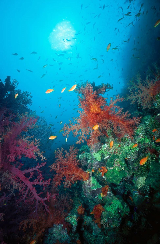 Makadissa on hyvät sukellusmahdollisuudet ja voit myös tutustua värikkääseen merenalaiseen maailmaan.