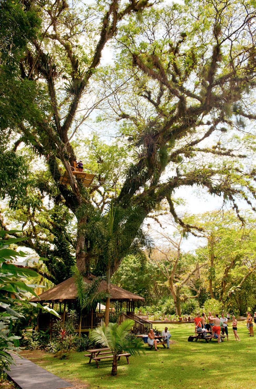 YS Falls -vesiputouksen vehreää ympäristöä