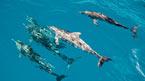 Rota dos Cetaceos – delfiinejä etsimässä - Voidaan varata jo ennen matkaa
